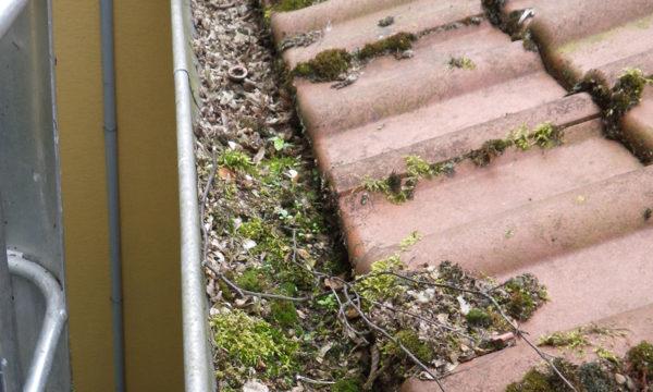 ropeworx - foto - regenrinnenreinigung und -sanierung
