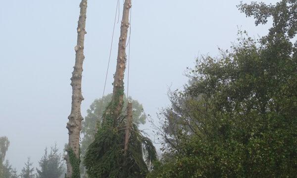 ropeworx - Industriekletterer - Baumfällung