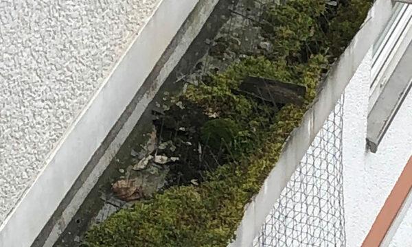 ropeworx - Industriekletterer - Taubenvergrämung